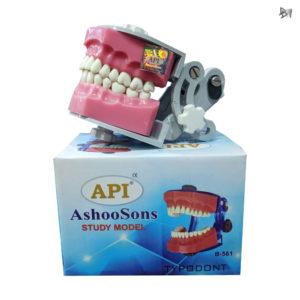 Typodont-Jaw-Set-API
